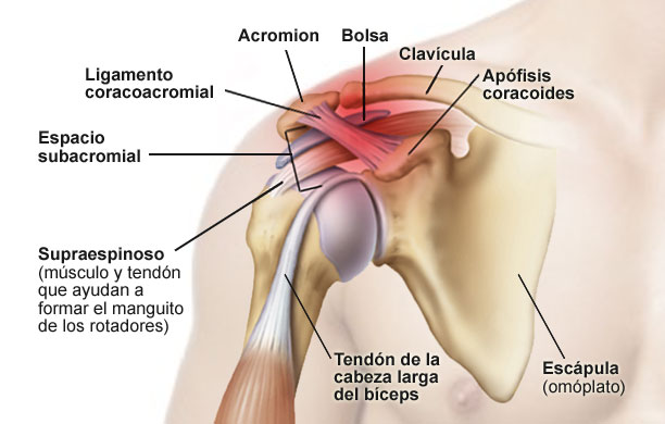Por qué me duele el hombro? Conoce sus posibles causas
