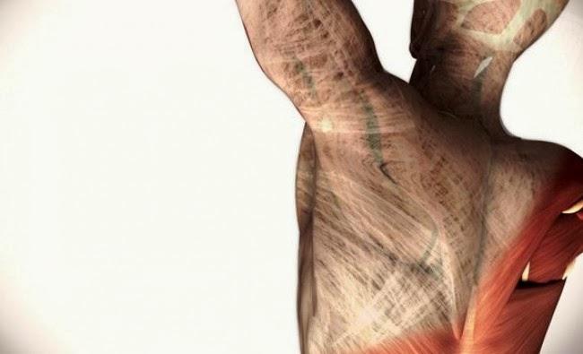 Cicatriz Muscular y Alteraciones en el Comportamiento Mecánico del Tejido Miofascial.