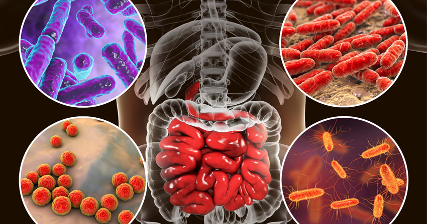 Microbiota en Coloproctología